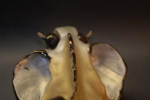 La Terreur des Mers (7)